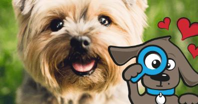 • Hondennamen teef vind je op Tinki.nl, het beste voor je hond.